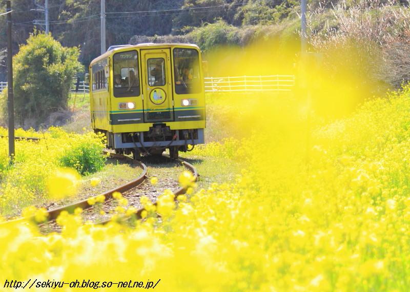 20110327_075.jpg